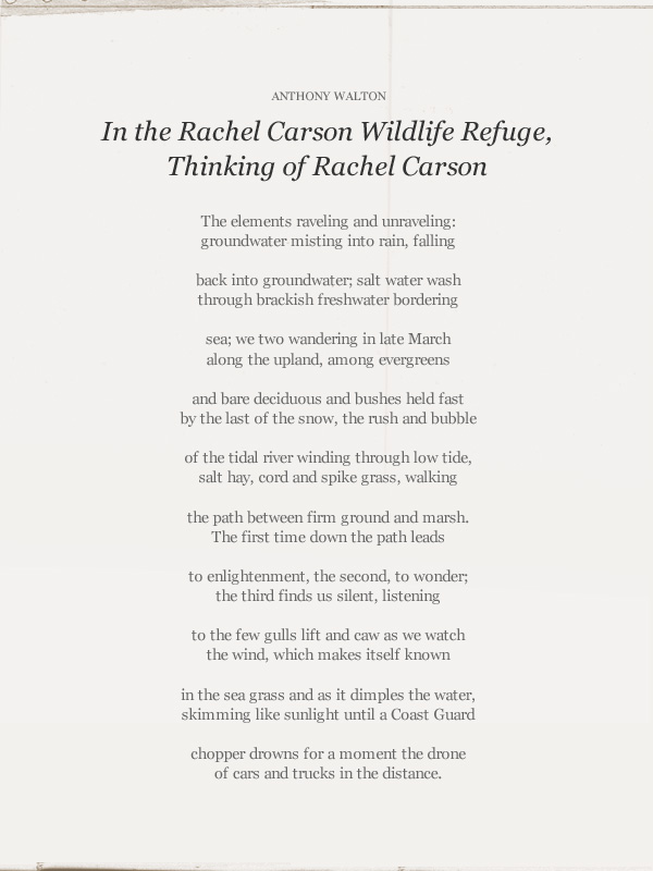 "rachel carson essay In the mid thirties, rachel combined both of her passions and started writing articles and radio scripts about nature and wild life her first major essay, "" undersea"" was published in the atlantic monthly in 1937 it was a major turning point in carson 's life simon and schuster suggested she expand it into a book they loved."