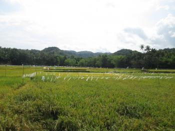 Bundok behind rice fields near Lazi, south shore of Siquijor Island