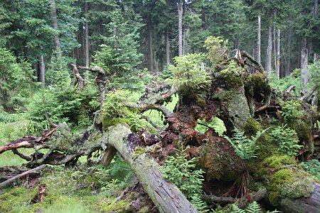 The Bavarian Forest National Park