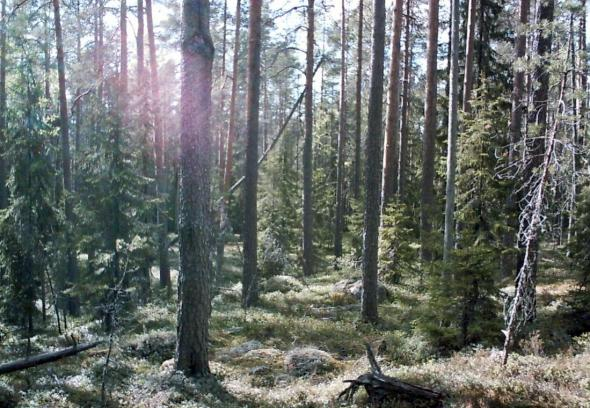 A view of the Pyhä-Häkki National Park