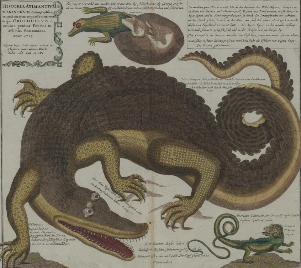 """History of Sea Creatures,"" 1753"