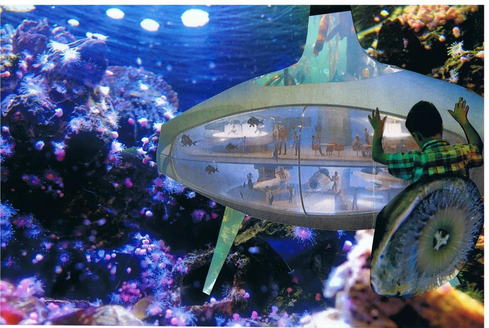 Design Aquarium Kast : Letter from susanne schmitt to the oceans and lakes aquarium