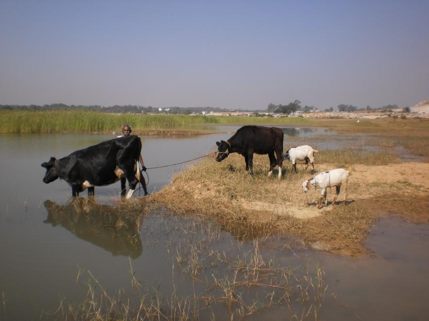 The Lost Lakes of Bangalore | Environment & Society Portal
